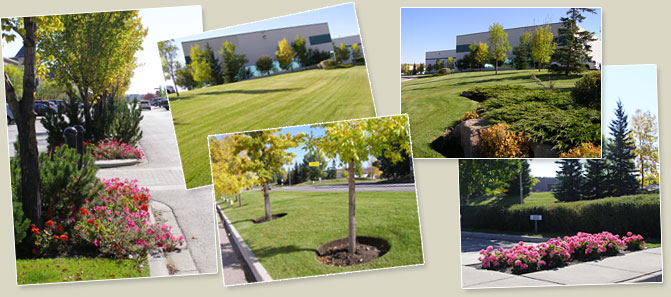 Breeze Landscaping Services For Calgary, Okotoks & Area